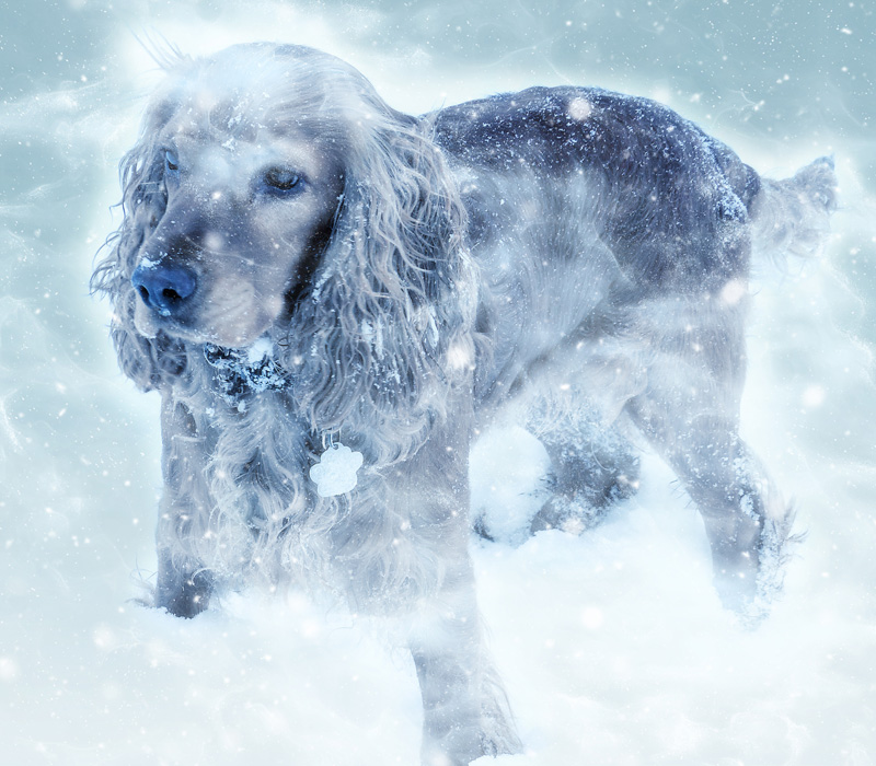 Cryotherapy for Animals